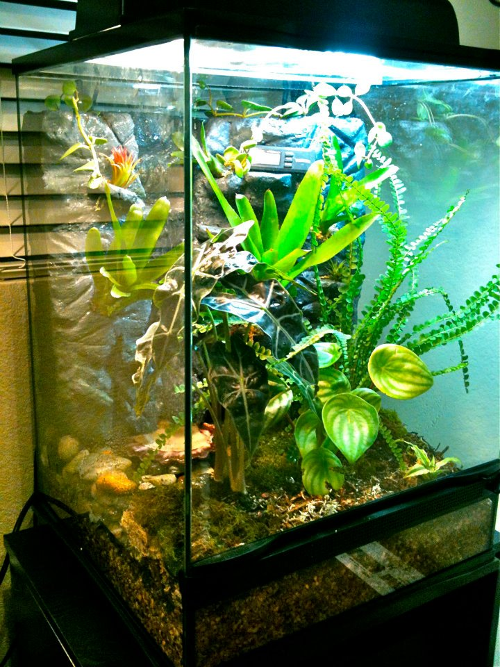 Diy Poison Dart Frog Vivarium The Daily Poison